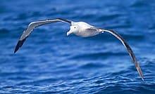 what is an albatross in golf